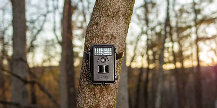 Infrared Vs Incandescent Game Cameras – What's Better?